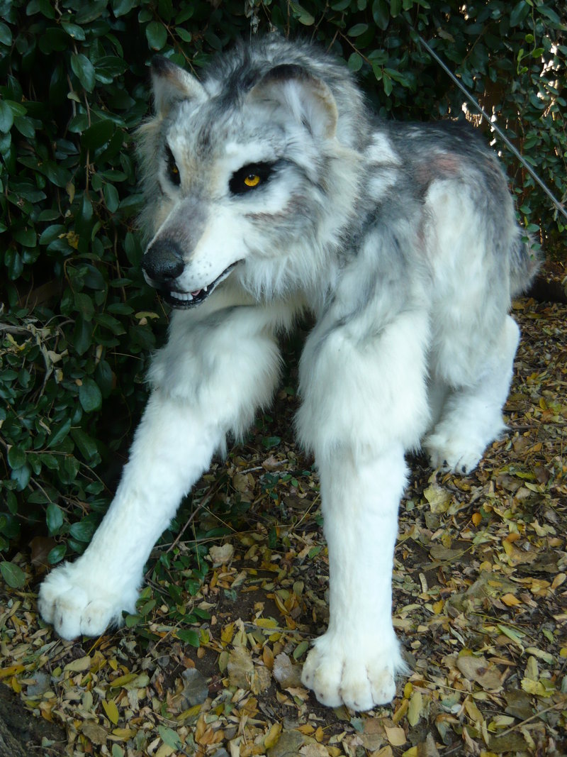Quadsuit Wolf http://www.beastcub.com/apps/photos/photo?photoid=58910808